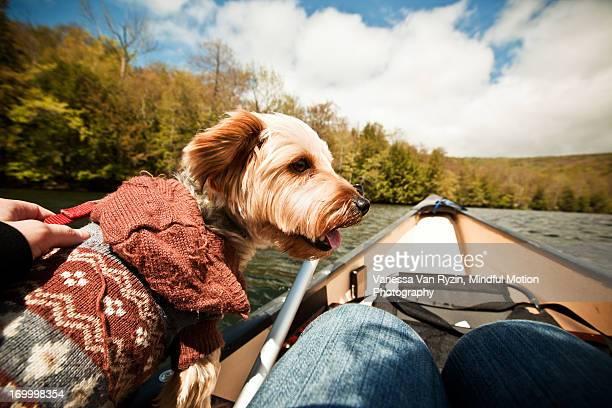 dog canoeing - vanessa van ryzin stock-fotos und bilder