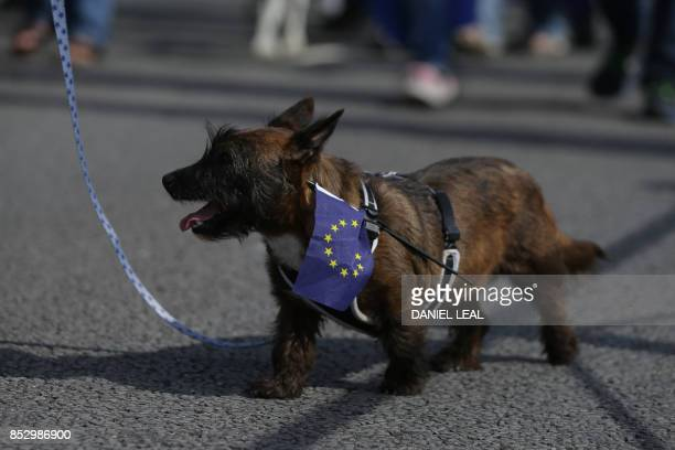 A dog carrying an EU flag walks with protestors along the seafront holding placards and waving European and Union flags in Brighton on September 24...