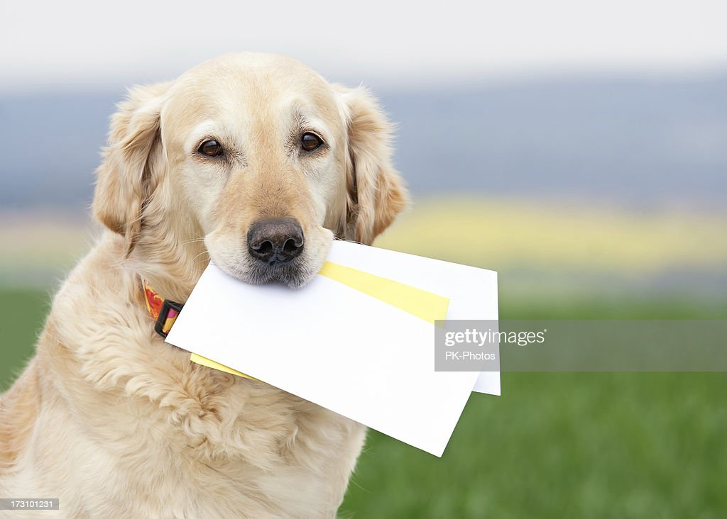 Dog carrying letters : Stock Photo