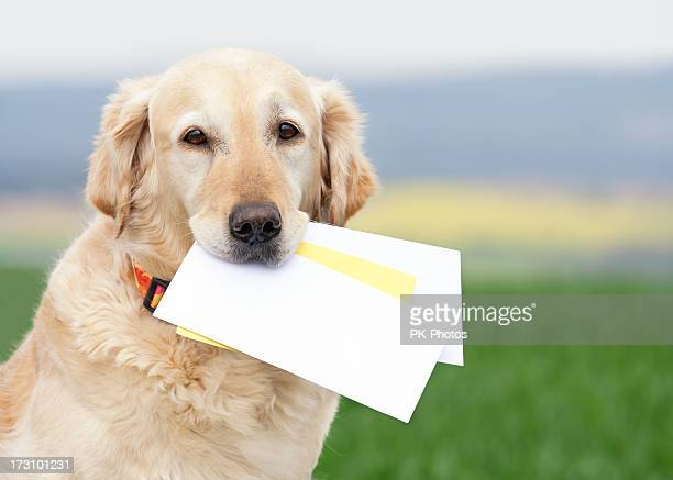 dog carrying letters - mail stock pictures, royalty-free photos & images