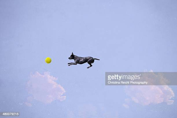 Dog Catching Ball in Air