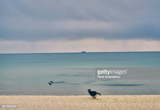 Dog Chasing Birds On An Empty Beach In A Stormy Weather