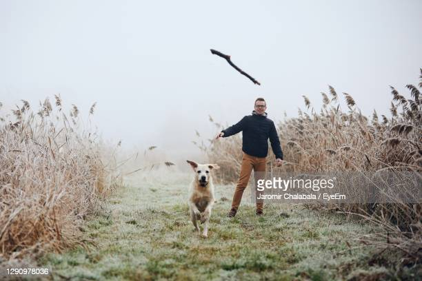 dog chasing stick thrown by man on field - catching stock pictures, royalty-free photos & images