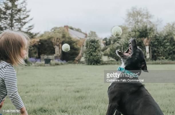 Dog chasing Tennis Ball