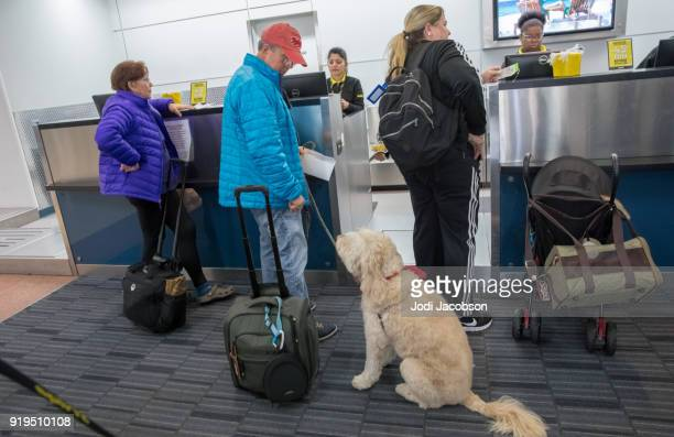 Dog checking in for flight on Spirit Airlines