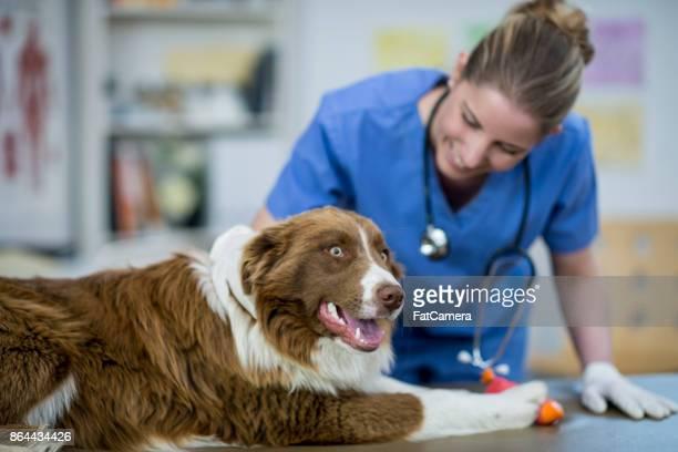 Hund-Checkup