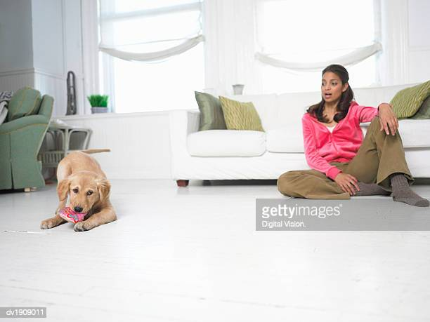dog chewing on a shoe, woman sitting on the floor looking at him in shock - woman open legs stock photos and pictures