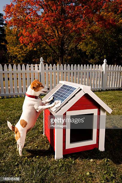 dog cleaning solar panel on kennel - montclair stock pictures, royalty-free photos & images