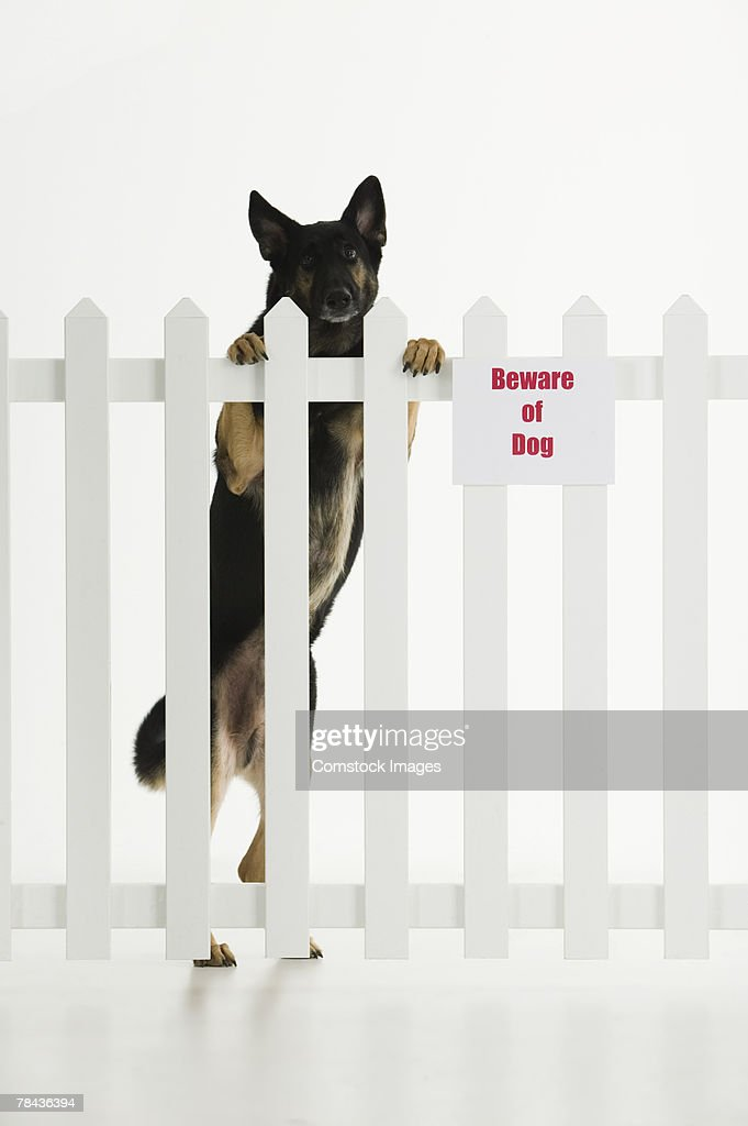 Dog climbing fence with beware of dog sign : Stockfoto