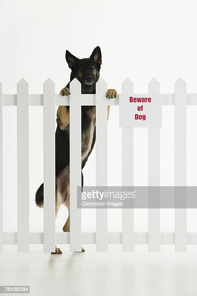 Dog climbing fence with beware of dog sign
