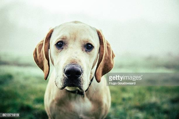 Dog close-up, sad