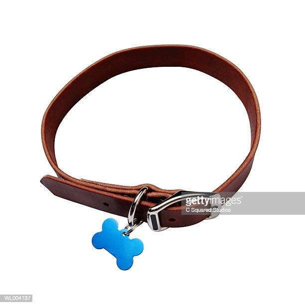 dog collar - collar stock pictures, royalty-free photos & images