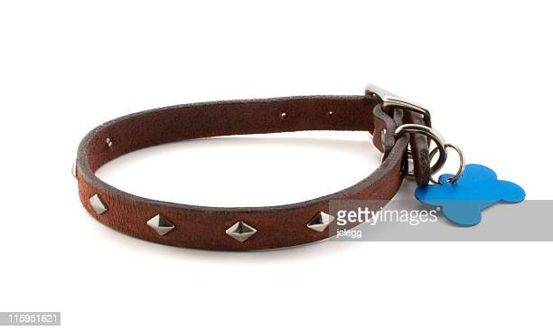 dog collar with blank id tag - collar stock pictures, royalty-free photos & images