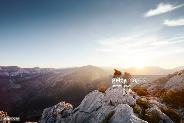 Dog, Collie, on mountain summit with sunset and mountain ranges behind, Spain