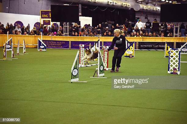 A dog competes at the Westminster Kennel Club and AKC Meet and Compete at Pier 92 on February 13 2016 in New York City