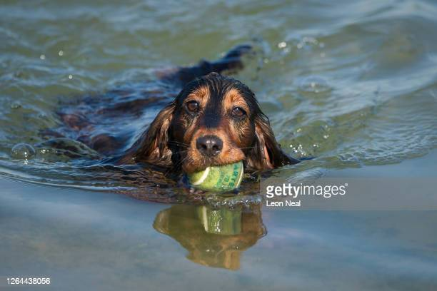 A dog cools off in the seawater lido on August 07 2020 in Margate United Kingdom Parts of England are preparing for a threeday heatwave with...