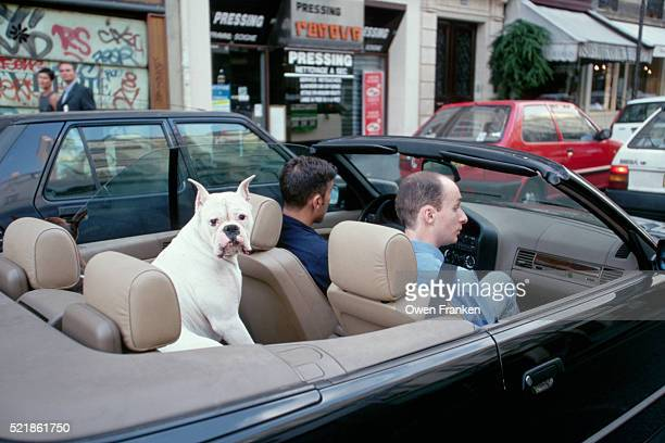 Dog Cruising Paris in Convertible