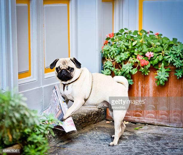 Dog delivering fresh newspaper