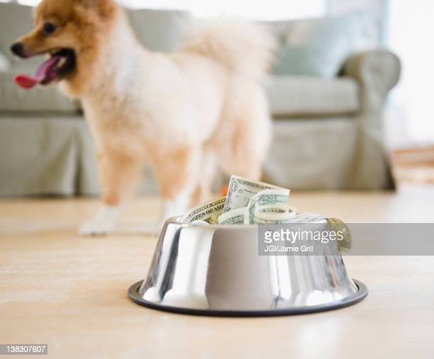Dog dish full of money