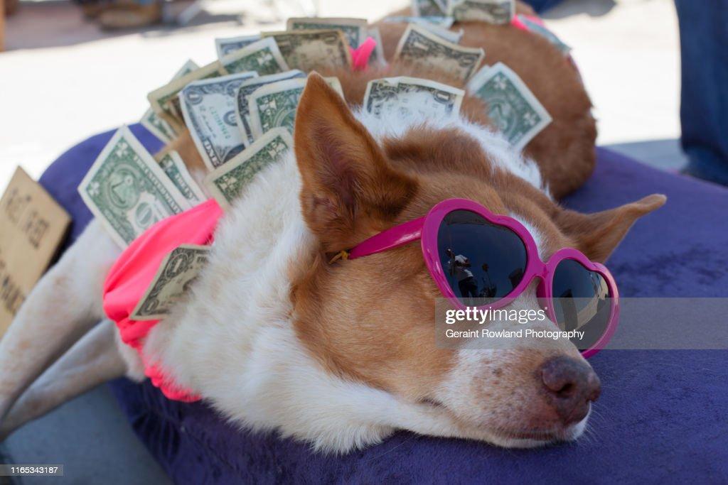 Dog & Dollar Bills : Stock Photo