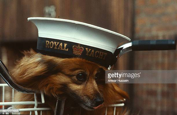 A dog dons a sailor's hat aboard the Royal Yacht Britannia on January 01 circa 1980s
