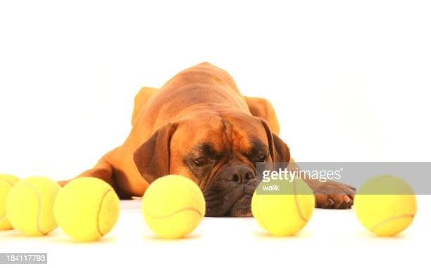 Dog dreaming about balls