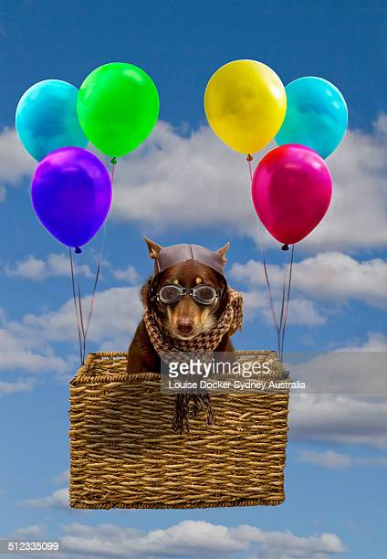 Dog dressed as a pilot in a basket