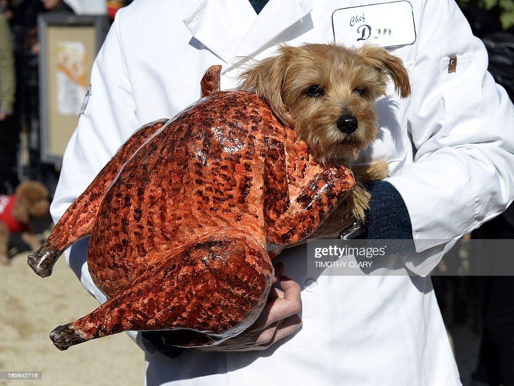 US-HALLOWEEN-DOG-PARADE : News Photo
