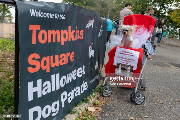 Dog dressed as Alexandria Ocasio-Cortez's Met Gala dress participates in the Annual Tompkins Square Halloween Dog Parade on October 23, 2021 in New...