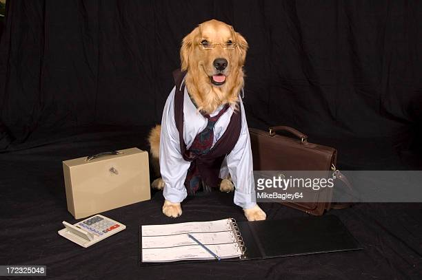 Dog dressed as businessman with office elements