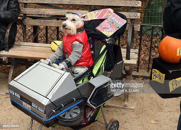 A dog dressed as Marty McFly from Back to the Future attends the 25th Annual Tompkins Square Halloween Dog Parade in New York October 24 2015 AFP...