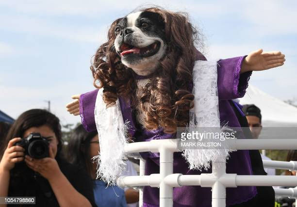 A dog dressed as Rose from the movie Titanic parades at the annual Haute Dog Howl'oween parade in Long Beach California on October 28 2018