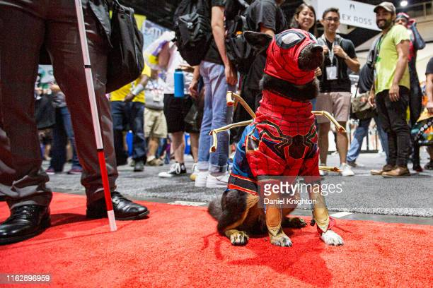 Dog dressed as Spiderman attends 2019 Comic-Con International at 2019 Comic-Con International on July 18, 2019 in San Diego, California.