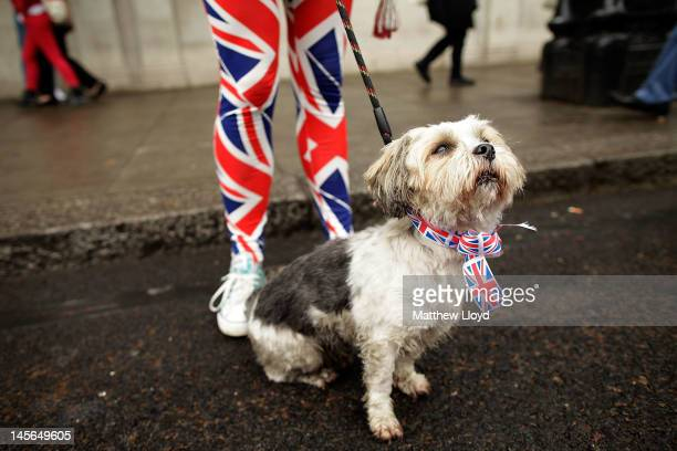 A dog dressed in a Union Jack necktie for the occassion on June 3 2012 in London England For only the second time in its history the UK celebrates...