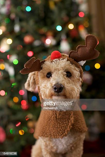 A dog dressed up as a Christmas reindeer