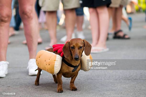 Dog dressed up as hot dog with ketchup