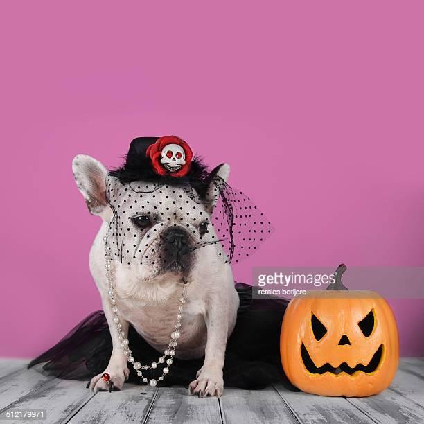 Dog dressed widow, Halloween