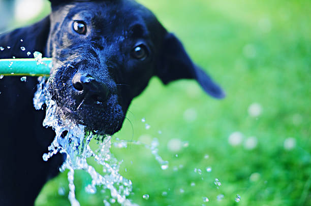 Dog Drinking From A Water Hose Wall Art