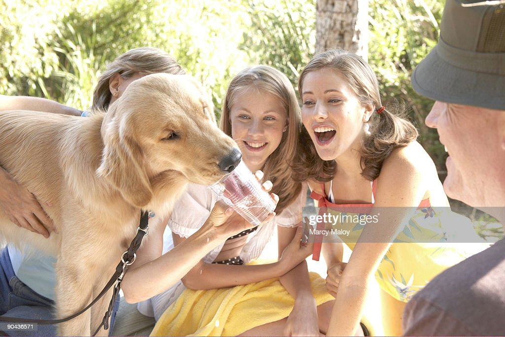 Dog drinking out of a cup at a family picnic. : Stock Photo
