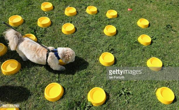 A dog drinks from a bowl at a water station as thousands of excited participants and their owners take part in the Great North Dog Walk on June 4...