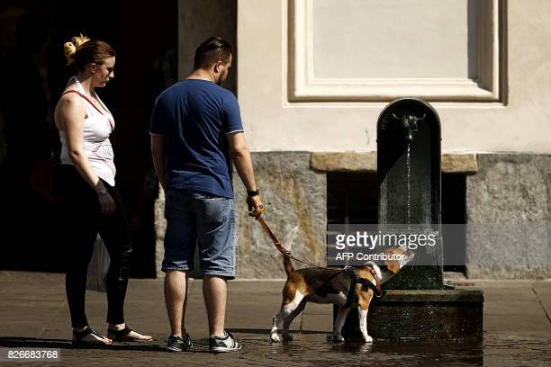 """Dog drinks water from a """"Turet"""", a typical fountain of Turin, in Piazza San Carlo, in Turin, on August 5, 2017. / AFP PHOTO / Marco BERTORELLO"""