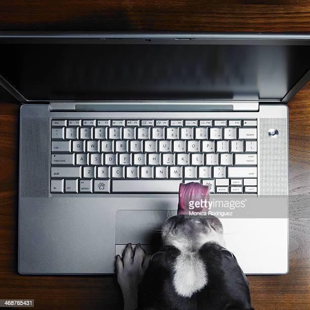 Dog drools ove computer screen