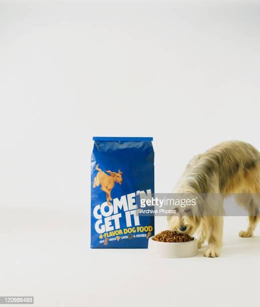 Dog eating dog food on white background