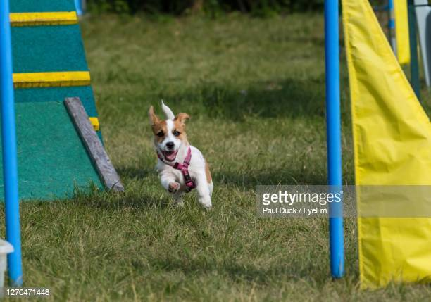 dog education - austria stock pictures, royalty-free photos & images