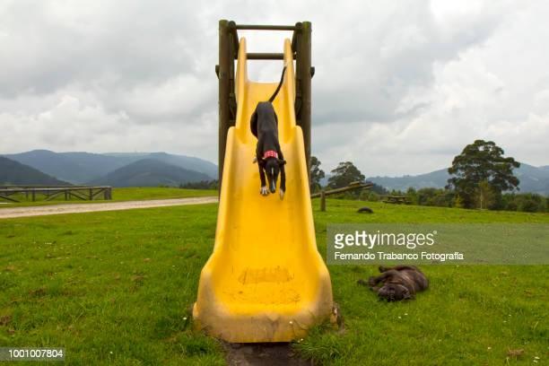 Dog enjoying on a slide