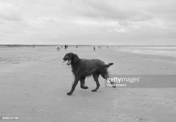 A dog enjoying on the beach