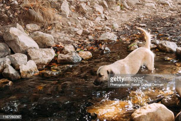 A dog enjoying the river in summer time, heat weather