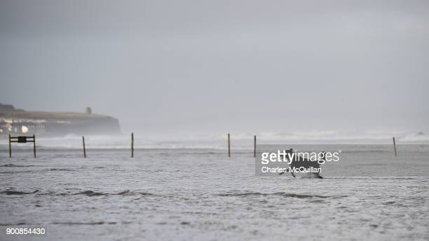 A dog enjoys a break in the weather after Storm Eleanor recorded winds of up to 90mph on January 3 2018 in Portrush Northern Ireland The Met Office...
