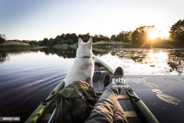 dog enjoys canoe on a river - canoe stock pictures, royalty-free photos & images