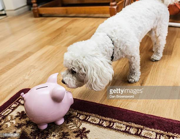 Dog examining piggy bank in living room